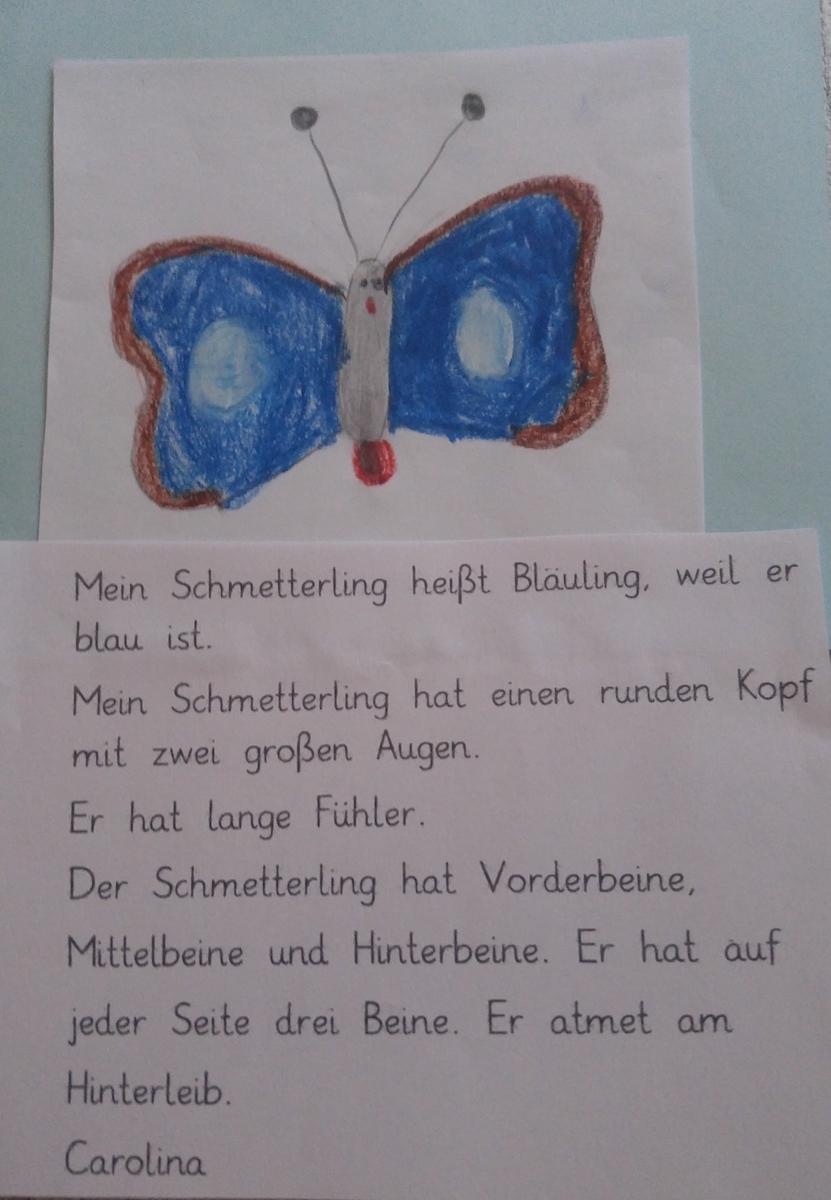Schmetterling_1