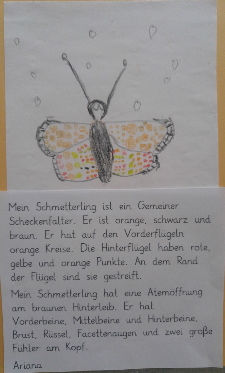 Schmetterling_4