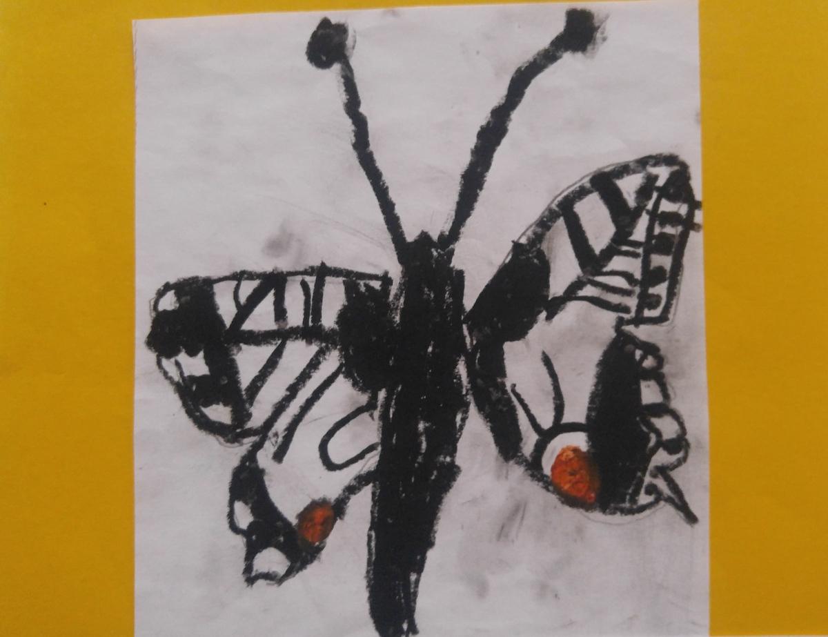Schmetterling_3