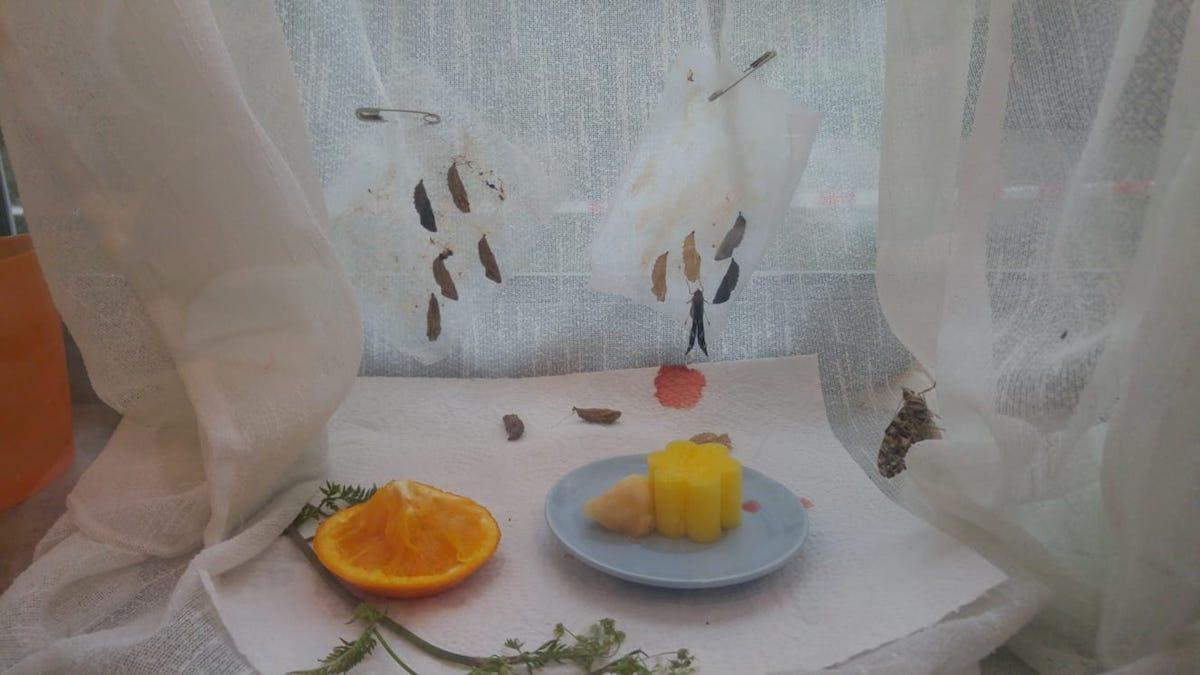 Schmetterlinge_Nahrung